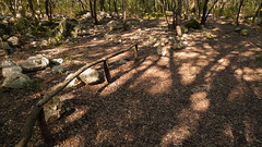 P1150057 (el vuelo del escorpin) Tags: winter espaa tree forest spain bosque rbol invierno serra mallorca baleares balearicislands tramuntana campanet fontsufanes