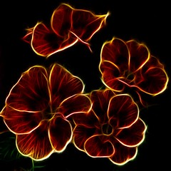 Neon Light (haberlea) Tags: flowers plants nature garden four mygarden neonlight primroses fractalius