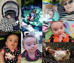 Luna Day 136 (evaxebra) Tags: baby collage picnic nap ryan sleep luna babcia bozena 365baby