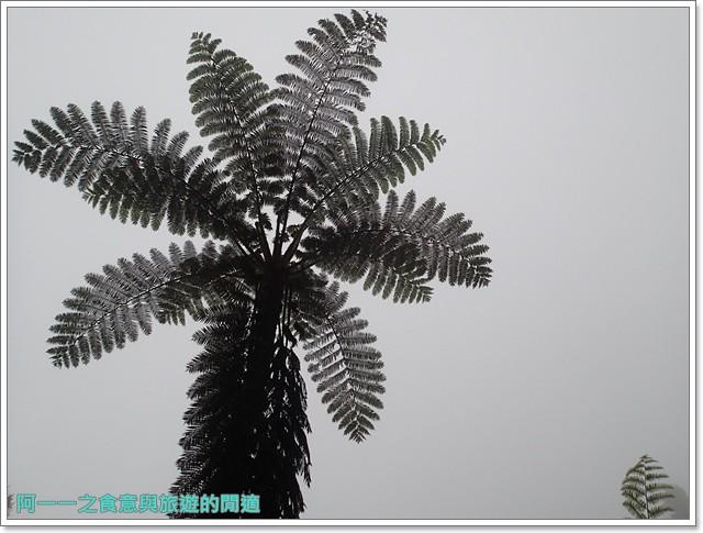 南投溪頭自然教育園區台大image075