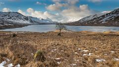 Loch Arklet & Arrochar Alps.jpg (Dylan Nardini) Tags: winter snow water landscape westhighlands 2015 lochard locharklet lochchon