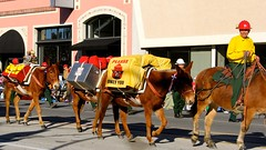 Mule with a Message (USFS Region 5) Tags: bear horses southwest animals rose forest pacific crowd parade pack smokey service pasadena spectators firefighter region mules 2015 usfs roseparade2015