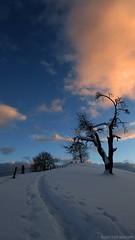 Sunset Tree (mattosberger) Tags: blue schnee winter sunset sky snow cold tree schweiz switzerland hiver steps neve thun wonderland inverno baum frio suica vesuv heiligenschwendi