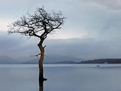 Waterlogged (kenny barker) Tags: scotland explore lochlomond milarrochybay