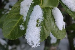 IMG_0355 (Schlesi Art Photography) Tags: schnee winter snow snowman alpen blatt wolfgangsee tannenbaum schafberg salzkammergut stgilgen 2015 ckecking banke lueg sc