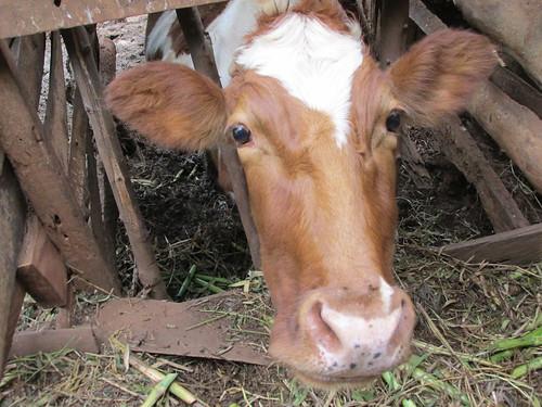 Visite au village, Kenya