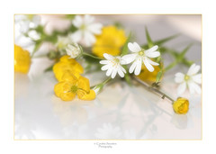 My Headgerow Bouquet (saundersc29) Tags: white reflection yellow spring wildflowers sigma105mm naturethroughthelens nikond750