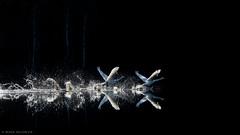 Swans takeoff (mikanuorva) Tags: light lake nature finland dark swan calm luonto lintu jrvi joutsen diamondclassphotographer flickrdiamond