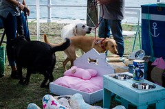 fartukarte-primera-edicion-ribadesella-paseo-de-la-grua-mascotas