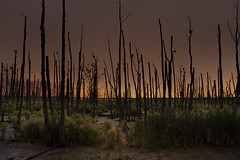Dead Forest (arturry) Tags: trees sunset sky sun tree nature forest sunrise dead ngc deadforest