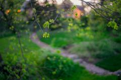 Spring in the Shire (Arutemu) Tags: 35mm spring bokeh sony voigtlander manualfocus nokton f12   ilce  voigtlander35mmf12 mirrorless a7r bokehville  sonya7r ilcea7r