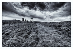 The Tower (ben.leng) Tags: wild sky blackandwhite bw tree tower grass marilyn clouds sheep angus path hill observatory moor strathmore derelict listed newtyle kinpurney