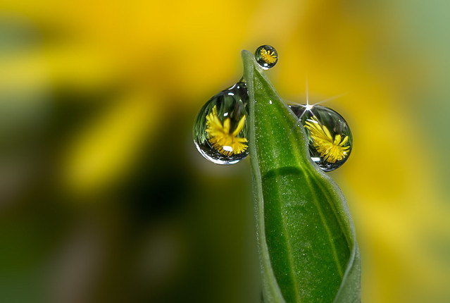 Dewdrops in springtime image