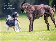 CONFRONTATION at CLYNE - 28th May 2016 - (John B Davies) Tags: ngc dogs park clyne
