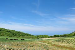 1Ikari Field Farm (anglo10) Tags: field japan kyoto seashore
