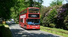 Wentworth Trident (bobsmithgl100) Tags: bus surrey alexander dennis virginiawater trident nfp 17869 alx400 lx03 wellingtonavenue stagecoachlondon lx03nfp wentworthpgagolfshuttle