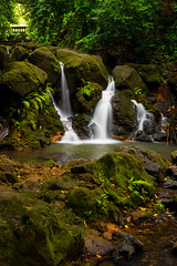 waterfall in the oahu rain forest (Sam Scholes) Tags: waterfall trees pool tree landscape beautiful rain forest nature water green oahu vacation hawaii scenic travel rainforest