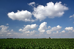 Mais and clouds () Tags: sky field weather clouds landscape nuvole country campagna mais cielo fields polarizer paesaggio polarizzatore