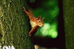 (zool18) Tags: life macro beauty animal forest canon squirrel flickr foto mark2