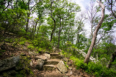 Major Welch Trail (kzoop) Tags: park trees newyork tree nature stairs outdoor hiking path hike bearmountain trail manual 12mm bearmountainstatepark samyang majorwelchtrail majorwelch