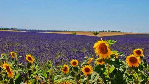 1.2.3 Soleil...-Valensole france