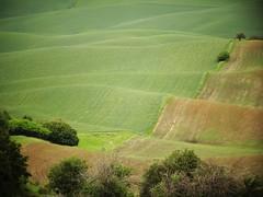 ~~~Rolling hills~~~ (France-) Tags: usa green field washington hill champs vert washingtonstate pnw colline palouse 381 etatsunis
