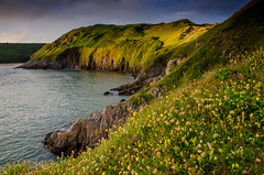 Gower Sunset (Peter Quinn1) Tags: wales gowerpeninsula threecliffsbay kidneyvetch yellowrattle bloodycranesbill