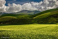 Fioritura monocromatica (BIO_MA Roberto Perucci) Tags: parco castelluccio nazionale sibillini fioritura