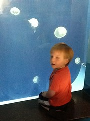 "Jellyfish at the Kansas City Zoo • <a style=""font-size:0.8em;"" href=""http://www.flickr.com/photos/109120354@N07/27821709746/"" target=""_blank"">View on Flickr</a>"