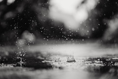 german summer (t.basel) Tags: rain summer blackwhite schwarzweis sw bw garden backyard garten raining drops tropfen frozen sony a7ii zeiss sonnar 55mm 18 bokeh