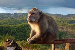 DSC02530 (Peripatete) Tags: bali mountains nature sunrise landscape volcano mount monkeys batur