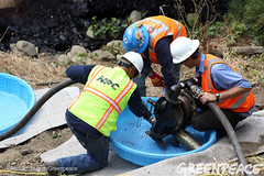 Hazmat Equipment in Oil Clean Up (Greenpeace USA 2016) Tags: oil spill pipeline fossilfuel ventura california pollution cleanup crude ca usa