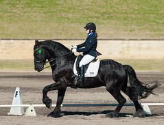 160703_YR_Champs_5391.jpg (FranzVenhaus) Tags: horses performance sydney australia competition event nsw athletes aus equestrian riders dressage siec