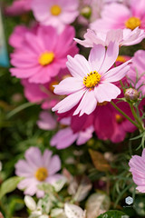 Flower (my.mosaic.life) Tags: flower fleur hongkong spring printemps victoriaharbor colourphotography flowerexpo