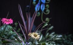 in the yard (Dotsy McCurly) Tags: yard flowers nature beautiful nikon d750 dof bokeh nj
