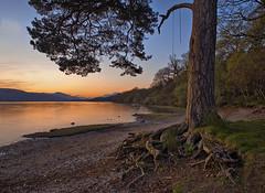Loch Lomond (Aubrey Stoll) Tags: trees sunset lake reflection tree water alexandria leaves scotland nationalpark sand britain north roots soil waters loch argyle lomond balloch gravel bute trussochs