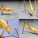 Tettigoniidae Katydid DSCF945422comp
