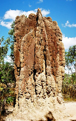 Landscape_Termite Mounds_NT_Litchfield_F1070031_2_D (renrut01) Tags: nationalpark mounds termite northernterritory litchfield