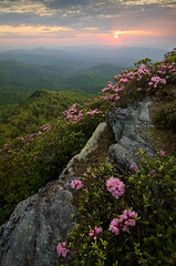 Spring Pink (DKNC) Tags: flowers sunrise nc spring northcarolina blooms linvillegorge tablerock carolinarhododendron sugarmountainphotography