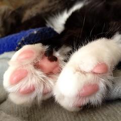 Kitty feet (merrickball) Tags: cat square kitten squareformat finnegan stinks iphoneography instagramapp uploaded:by=instagram foursquare:venue=4bd48211637ba593f5ccf470