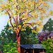 "Tree by Jack's Shed - 24"" x 36"" - Oil - Sold"