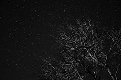 (Hlder Santana) Tags: longexposure light shadow brazil sky blackandwhite bw white black tree byn blancoynegro luz nature beauty branco brasil night contrast dark stars photography dawn photo