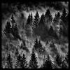_CRC2074 defv1.jpg (cor ritmeester 2) Tags: berg oostenrijk bomen zoom events herfst wolken bergen bos damp 2012 tegenlicht lariks otherkeywords rangersdorf overigetrefwoorden