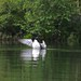 Big Clemons Pond Loon 1 - S Durst.