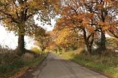 13672 Bomish Lane (melbettsimages) Tags: wood uk trees england tree nature landscape countryside view autum cheshire northwest walk peaceful picturesque tranquil sunnyday