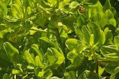 Sofitel So Mauritius, Bel Ombre (44) (JULIAN MASON) Tags: mauritius sofitel beauchamp 2013 belombre julianmason somauritius