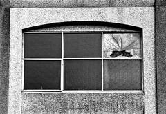 B&W Cracked Window (Orbmiser) Tags: autumn bw fall broken oregon portland nikon cracked 28105mm d90 afd f3545 wiindows nikon28105mmf3545afd