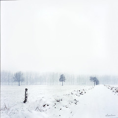 (moggierocket) Tags: trees winter white snow cold rural landscape path slide february fujiprovia400f rolleicordv