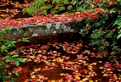 Fallen leaves (Giovanni88Ant) Tags: autumn momiji  vision:outdoor=0648