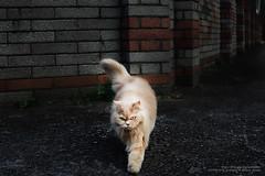 MAU_9623 (mau-daban) Tags: cat kitty